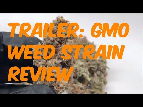 Trailer: GMO Cannabis Strain Review