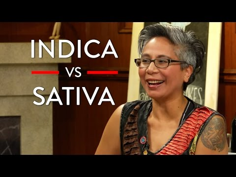 Different Types Of Marijuana (Indica vs Sativa vs CBD)