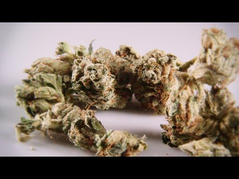 Cannabis Up Close #5: Famous Larry OG (Indica) – Marijuana Strain Review