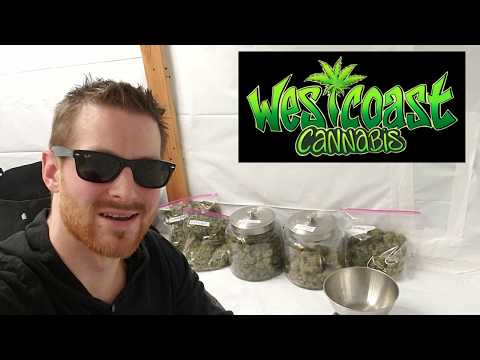 LED Harvest Results – Optic 1 vs Optic 1XL Photoperiod Cannabis Grow – 3 Plants being weighed up
