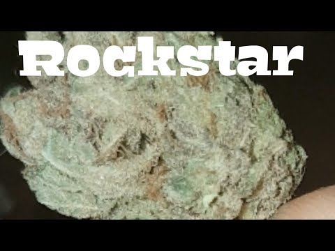 Canadian Cannabis Strain Review – RockStar