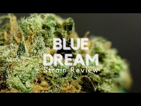 Blue Dream Cannabis Strain Review – ISMOKE