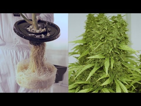 James E. Wagner Cultivation Corporation Aeroponic Cannabis Grow-op