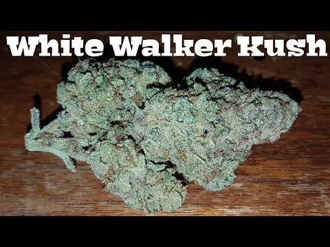 Canadian Cannabis Strain Review – White Walker Kush by Broken Coast