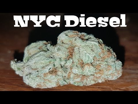 Canadian Cannabis Strain Review – NYC Diesel