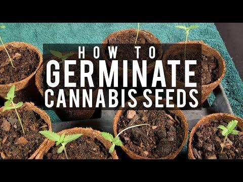 Seeds, Soil & Sun: How to Grow Cannabis (#1 Germinating Seeds)