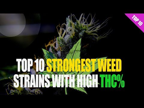 Top 10 Strongest WEED Strains with their THC level!.