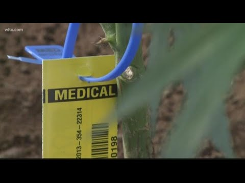 Medical marijuana bill introduced in the Senate