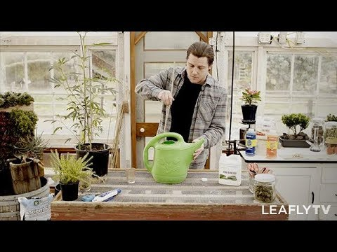 Homegrown Episode 2 – Tips for Growing Healthy Cannabis Plants