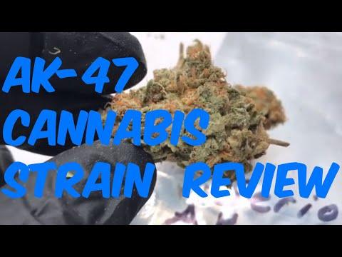 AK-47 Cannabis Marijuana Weed Strain Review
