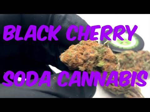 Black Cherry Soda Cannabis Marijuana Weed Strain Review