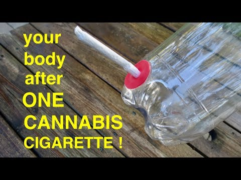 How Smoking Just 1 CANNABIS CIGARETTE wrecks Your Lungs ●  A Must See!