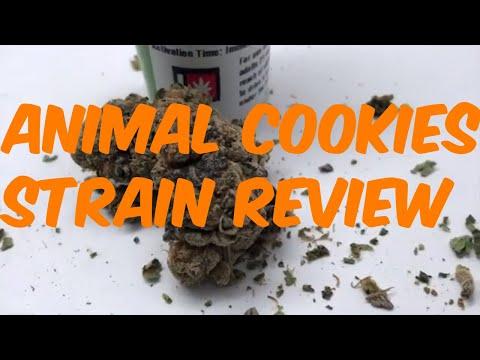 Animal Cookies Cannabis Strain Review