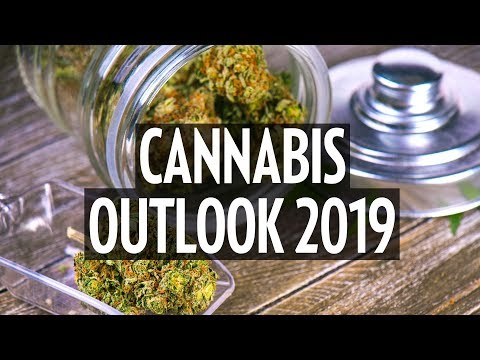 Cannabis Outlook 2019: 'The American companies are coming on fast'