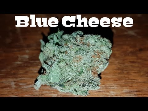 Canadian Cannabis Strain Review – Blue Cheese