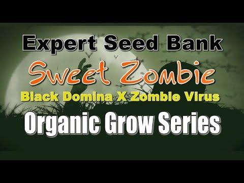 Cannabis cultivation Documentary