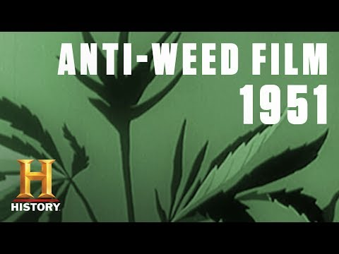 The Dangers of Marijuana Addiction (in 1951) | Flashback | History