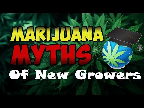 Growing Cannabis Myths – That Newbies Believe
