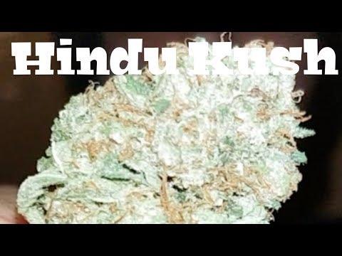 Canadian Cannabis Strain Review – Hindu Kush