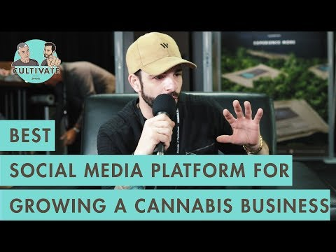 Best Social Media Platform for Growing a Cannabis Business – Using LinkedIn to survey the Market