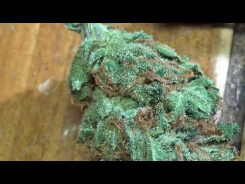 CT WEED REVIEWS #425 Dispensary STRAIN: CHOCOLATE CHUNK