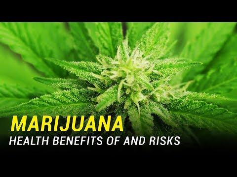 Marijuana: Health Benefits and Risks