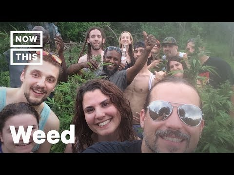 Higherway Travel Agency Books Cannabis Getaways | NowThis