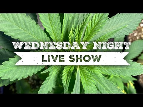 Cannabis YouTube's Garden Broken into, Children and CBD, Snoop Dogg Legal Trouble and More!