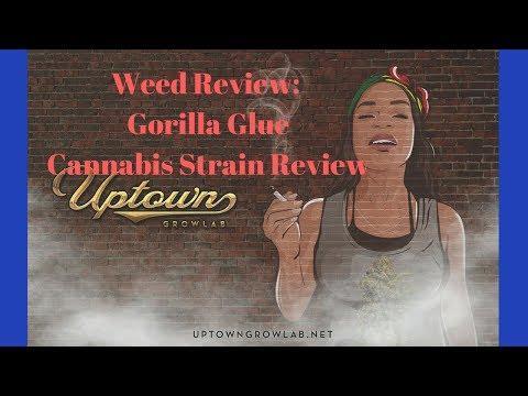 Weed Review: Gorilla Glue Cannabis Strain Review, marijuana strain review