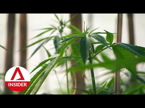 Inside Thailand's First Legalised Cannabis Plantation | Insight | CNA Insider