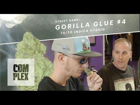 "Motor City High: ""Gorilla Glue #4"" Marijuana Strain 
