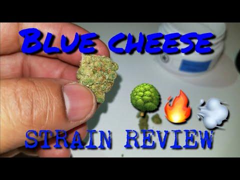 BLUE CHEESE MEDICAL STRAIN REVIEW 🌳🔥💨 || PA MEDICAL MARIJUANA PROGRAM