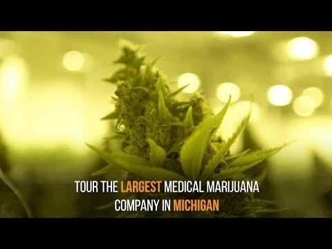 Skymint – Michigan's Largest Medical Marijuana Company