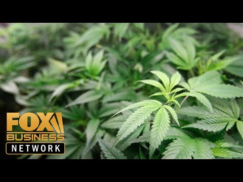 Marijuana taxes too high for California pot growers