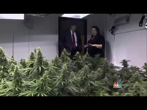 CNBC Marijuana USA documentary (HD)