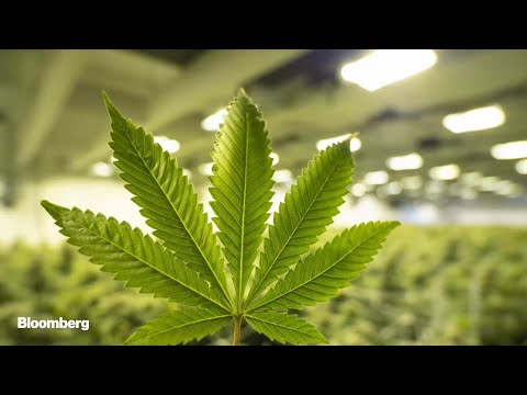 U.S. Companies Ready to Cash In on Legal Weed