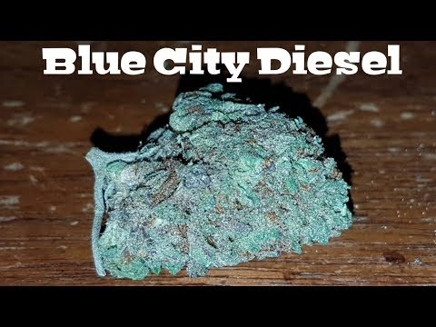 Canadian Cannabis Strain Review – Blue City Diesel by The High Club