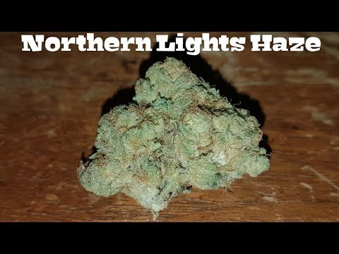 Canadian Cannabis Strain Review – Northern Lights Haze (Galiano) by Broken Coast
