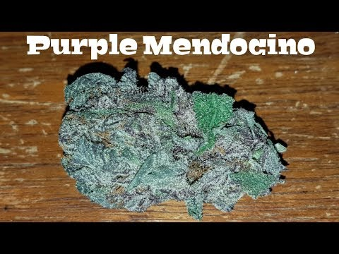 Canadian Cannabis Strain Review – Purple Mendocino by The High Club