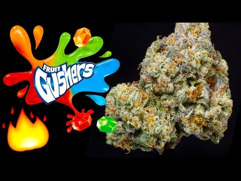 GUSHERS – WEED STRAIN REVIEW