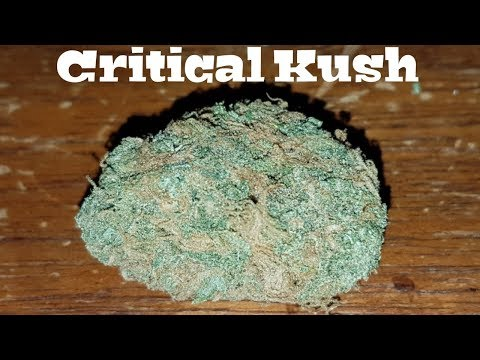 Canadian Cannabis Strain Review – Critical Kush by GetWeedOnline