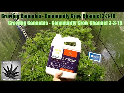Growing Cannabis – Community Grow Channel 3-3-19