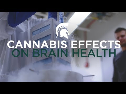 Brain Health: Exploring the role of cannabis in treating serious diseases