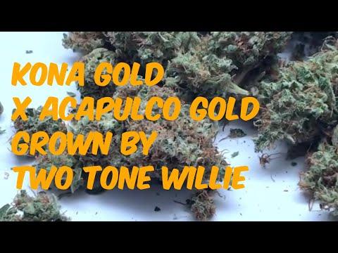 Kona Gold x Acapulco Gold Cannabis Marijuana Weed Strain Review