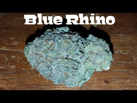 Canadian Cannabis Strain Review – Blue Rhino by PNWBud