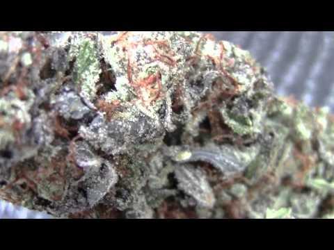 1st US High Times Cannabis Cup Denver Colorado! DAY 2 #CRTV420