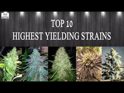 Top 10 Highest Yielding Strains 2018