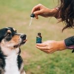 Have you tried CBD for your pet?