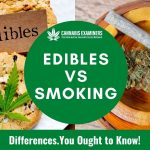 What are the Differences between Edibles and Smoking? You Ought to Know!-cannabisexaminers.com