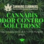 Cannabis-odor-cannabisexaminer.com